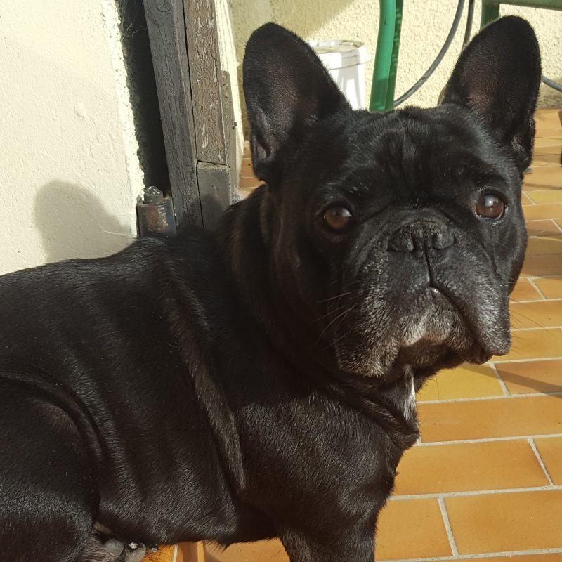 Le chien d'Emilie Varrier
